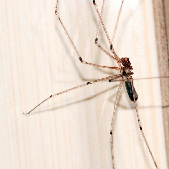 Spiders, Pest Control in Harold Wood, Harold Hill, Noak Hill, RM3. Call Now! 020 8166 9746